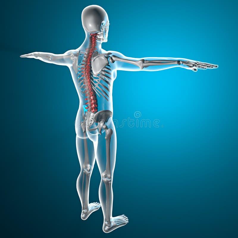 Squelette de rayon X d'épine illustration de vecteur