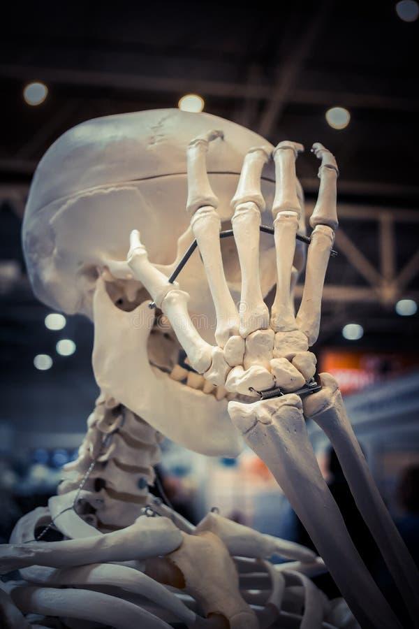 Squelette et disposition humains d'un plan rapproché humain de crâne, photos libres de droits