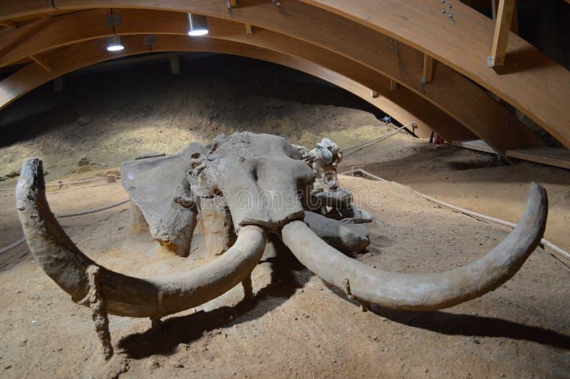 Squelette gigantesque, Serbie, Viminacium photographie stock