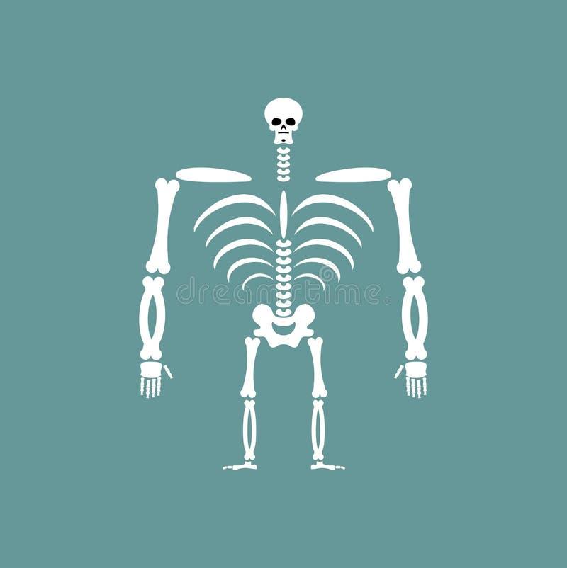 Squelette humain d'isolement Crâne et os Épine et nervures illustration stock