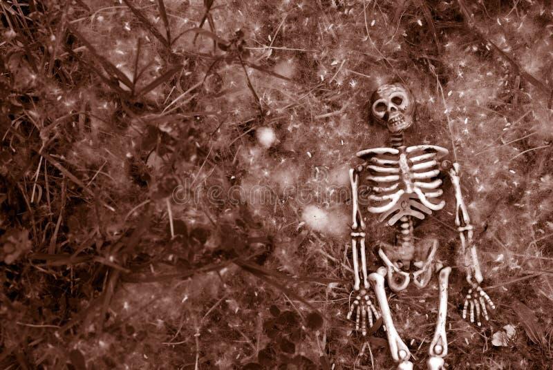 Squelette rampant de veille de la toussaint image stock