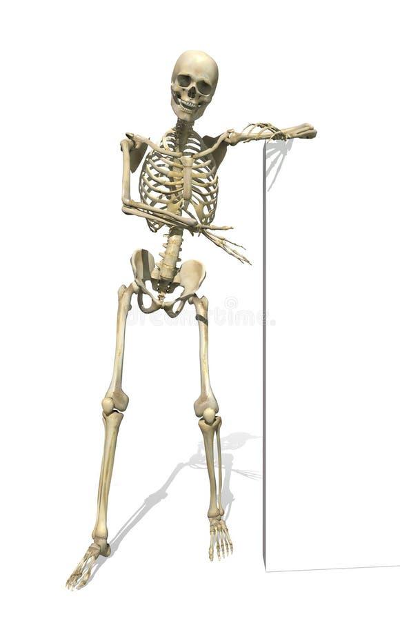 Squelette restant près du signe ou du cadre illustration libre de droits