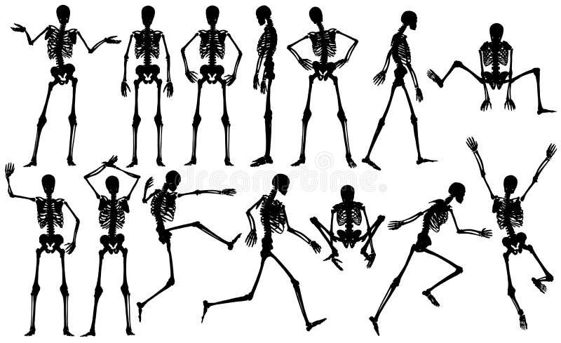Squelettes illustration de vecteur