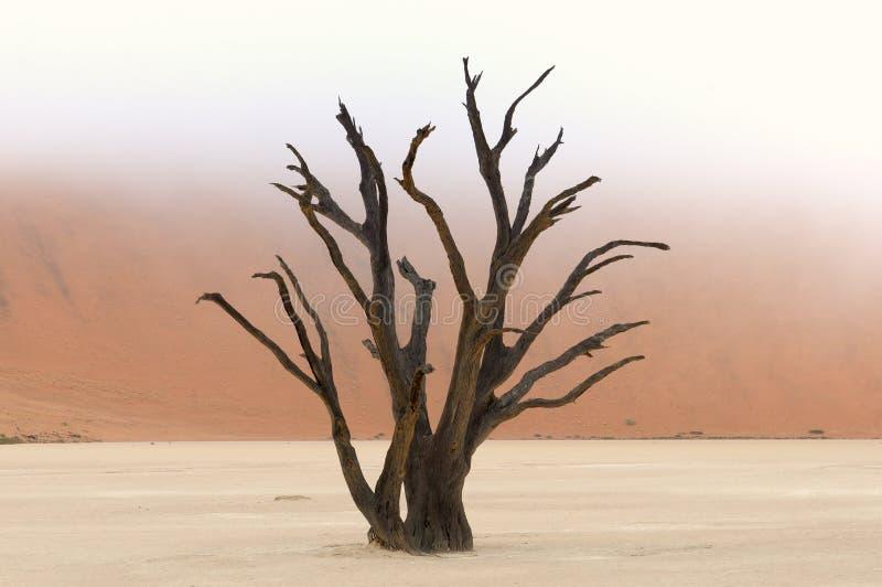 Squelettes d'arbre, Deadvlei, Namibie image stock