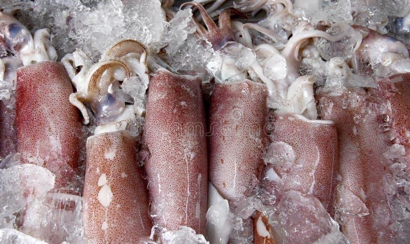 Download Squid stock photo. Image of food, cook, squid, taste - 26497226