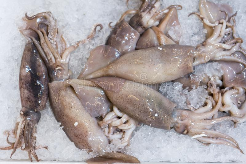 squid on a display in the ice. Sea food royalty free stock photo