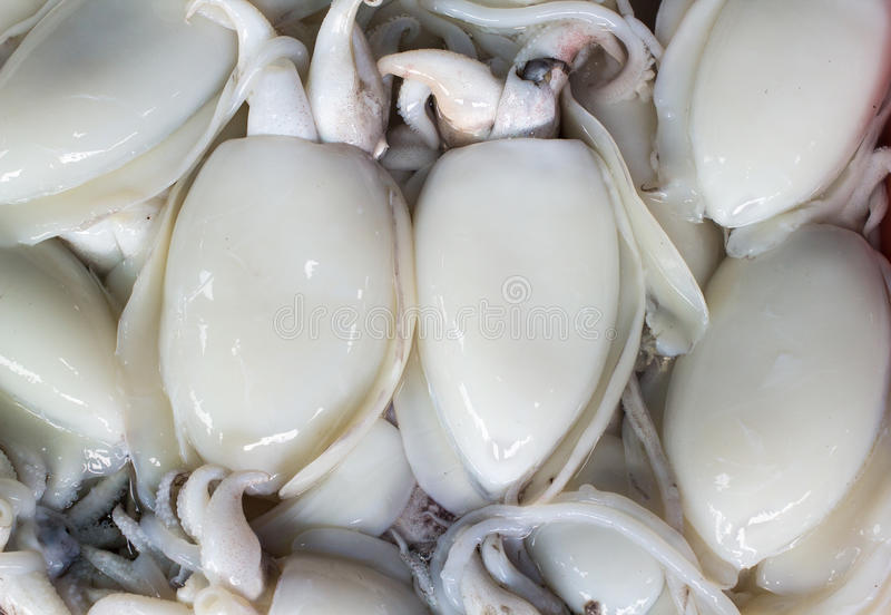 Squid is Protien source for your life. Which you can find in the sea royalty free stock photos