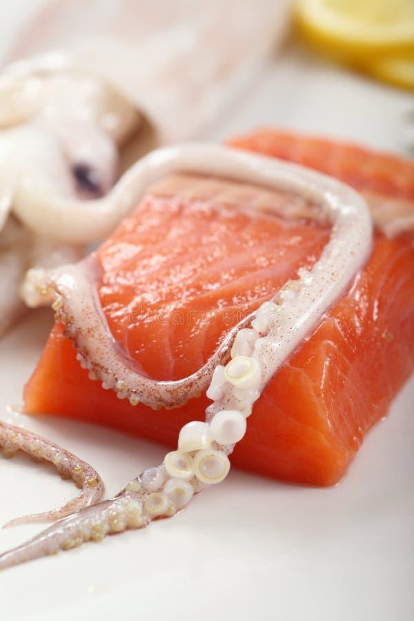 Download Squid Sucker Stock Image - Image: 8194581