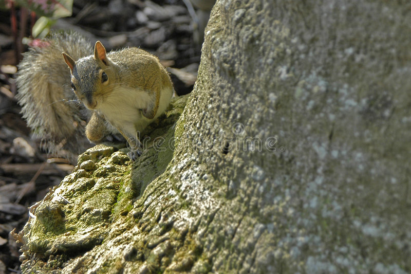 Download Squirrel stock image. Image of painted, squirrel, bark - 212331
