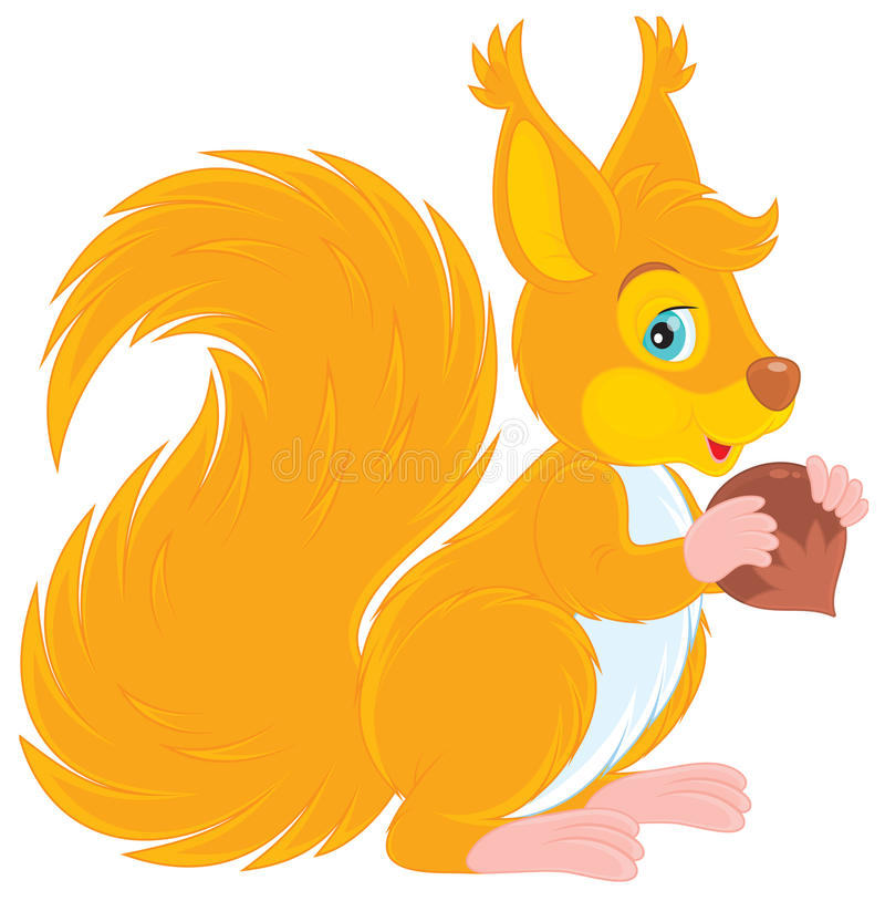 Free Squirrel Stock Photography - 25009542