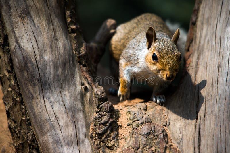 Download Squirrel Stock Image - Image: 25078881