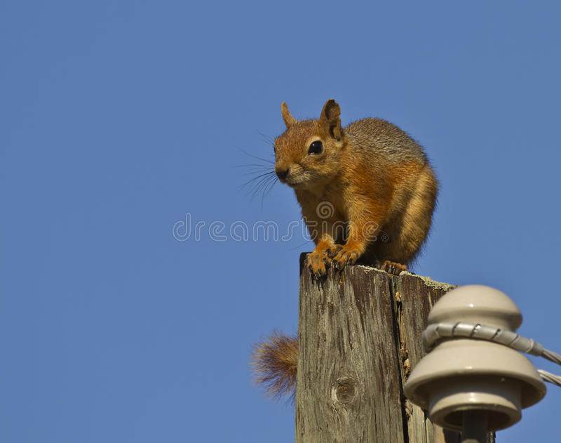 Download Squirrel stock photo. Image of rock, rodent, chipmunk - 26734052