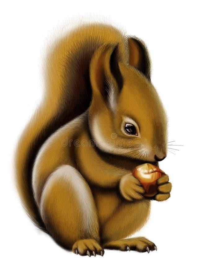 Free Squirrel Stock Image - 6668991