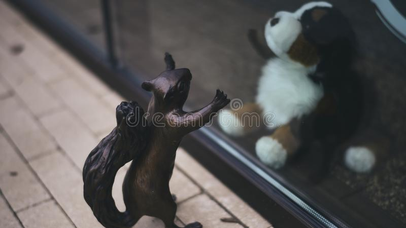 A squirrel in Avalon and a puppy. Two friends eagerly greeting each other on different sides of the glass, having fun royalty free stock images