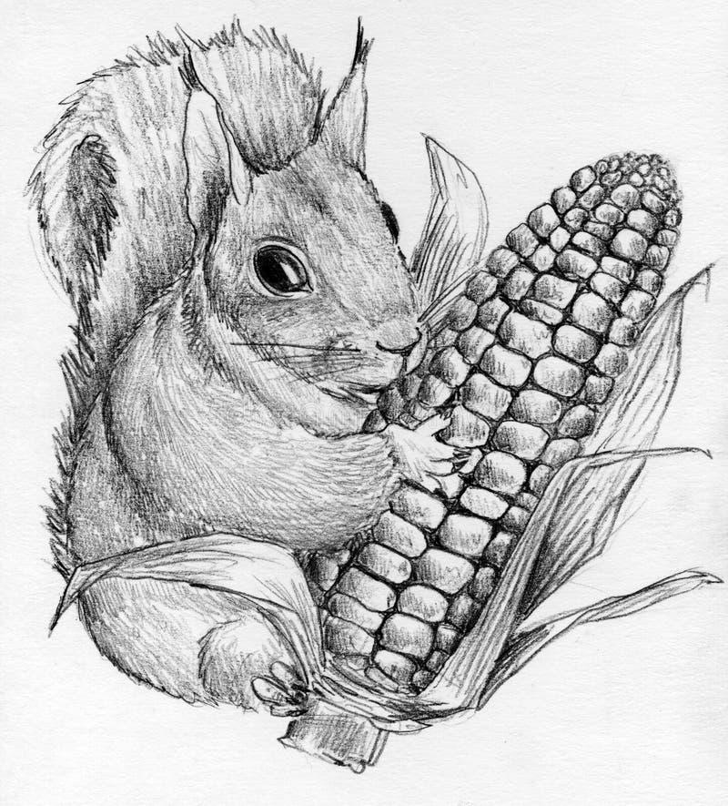 Squirrel with corncob stock illustration