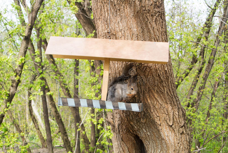 Download Squirrel E Un Alimentatore Alla Città Forest Park, Alimentante Gli Animali  Selvatici Alla Città