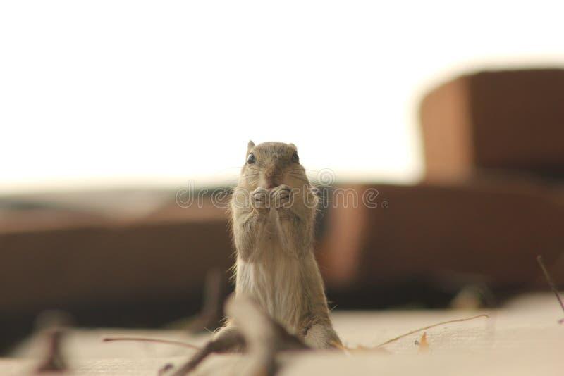 Squirrel Eating Free Public Domain Cc0 Image