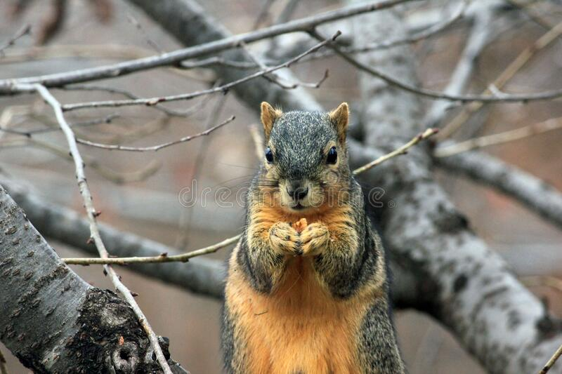 Squirrel Eating A Nut Free Public Domain Cc0 Image