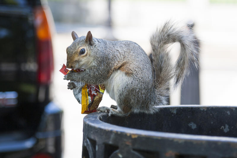 Squirrel Eating Peanuts Stock Photo