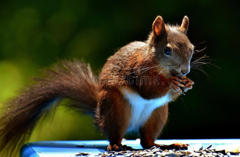 Squirrel, Fauna, Mammal, Rodent Free Public Domain Cc0 Image
