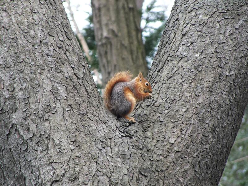 Squirrel, Fauna, Mammal, Tree stock photos