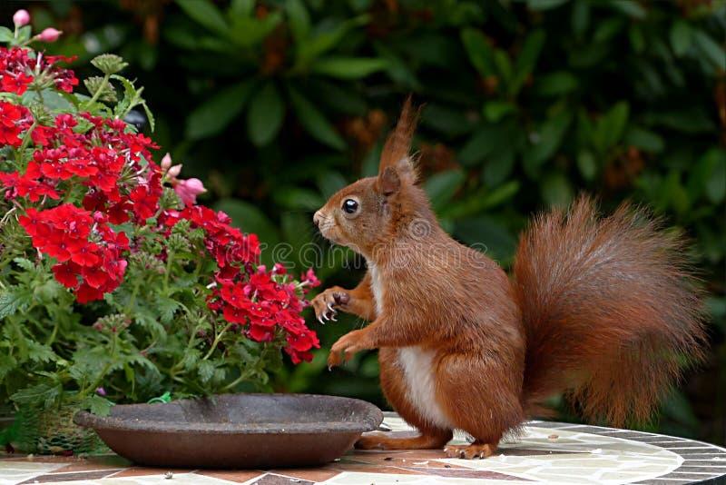 Squirrel, Fauna, Mammal, Wildlife Free Public Domain Cc0 Image