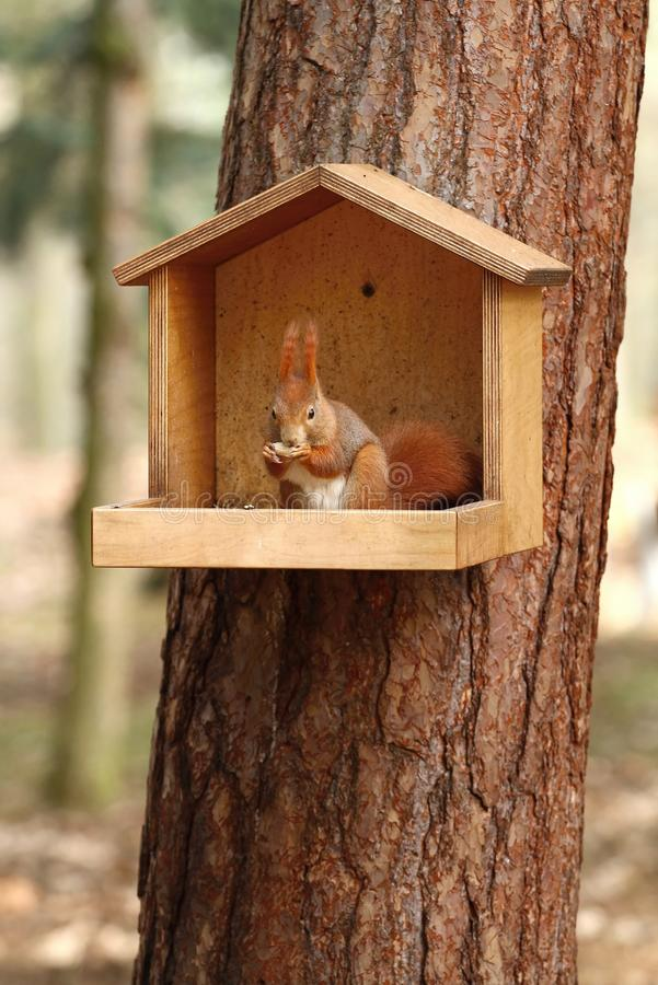 In squirrel feeder stock image