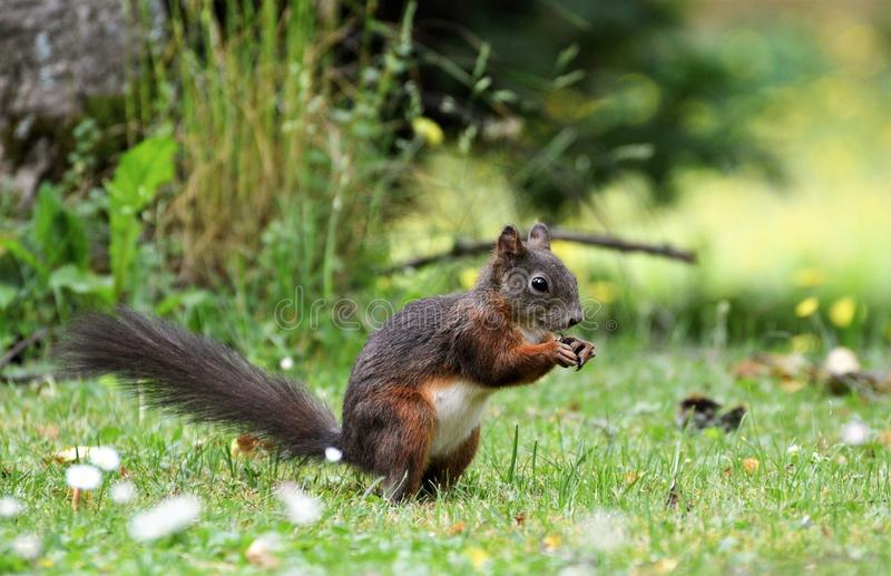 Squirrel, Mammal, Fauna, Fox Squirrel Free Public Domain Cc0 Image