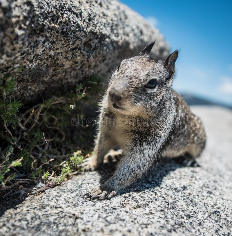 Squirrel in Nature stock photography