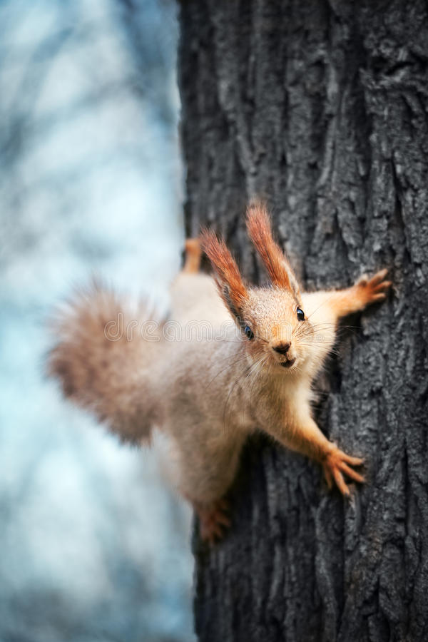 Free Squirrel On A Tree Stock Photo - 39322700