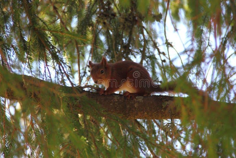 Squirrel Free Public Domain Cc0 Image