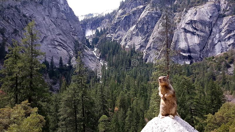 Squirrel on rock stock images