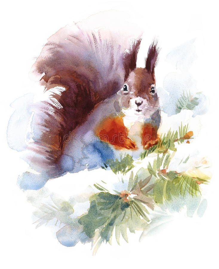 Squirrel Sitting on the Snowy Fir Tree Branch Wild Animal Winter Illustration Hand Painted stock illustration