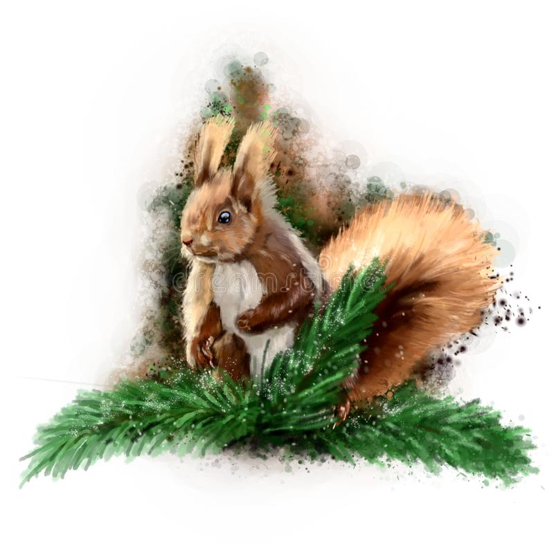 Squirrel on a spruce branch. stock image