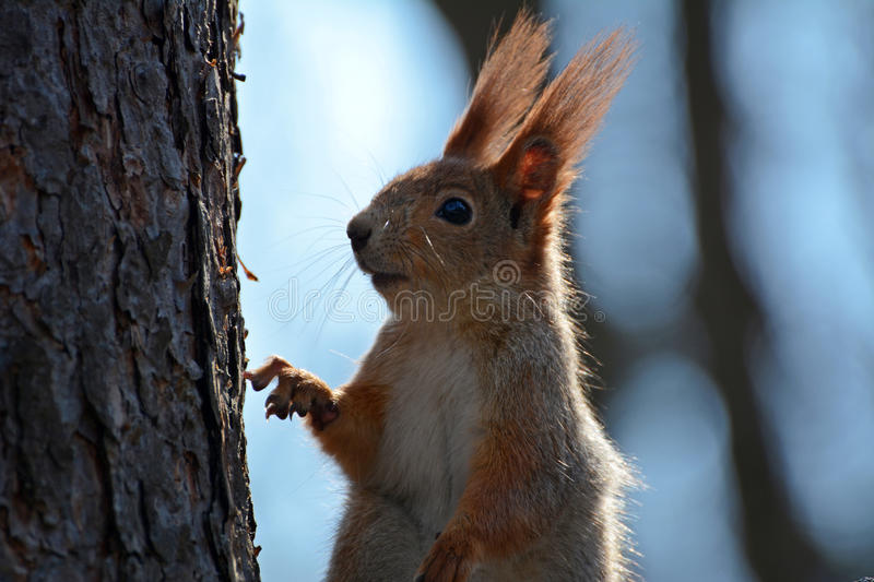Download Squirrel Takes Someone Note Stock Image - Image: 43115595