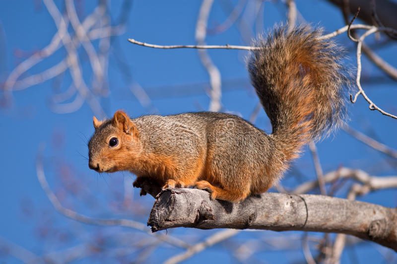 Download Squirrel in a tree stock photo. Image of concentration - 19159694