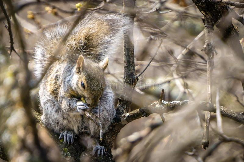 Squirrel. On tree stock photography