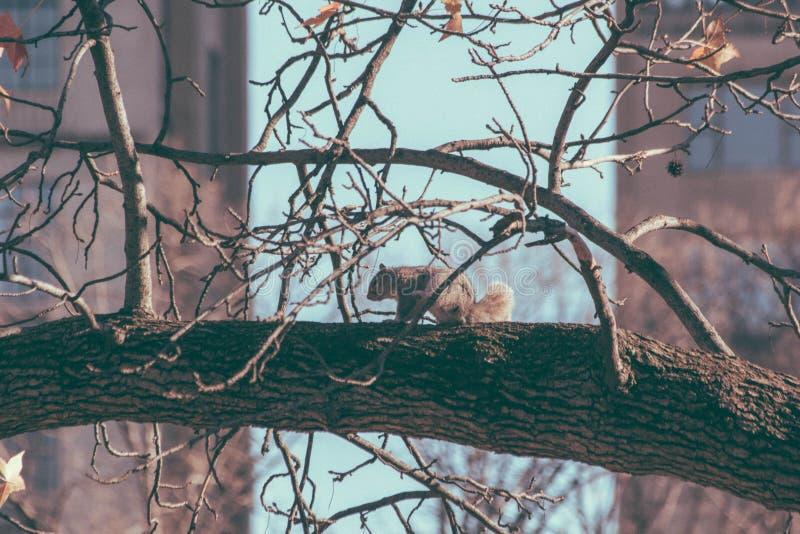 Squirrel In Tree Free Public Domain Cc0 Image
