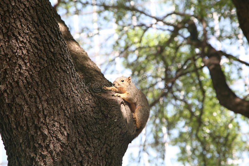 Squirrel on a tree stock photography
