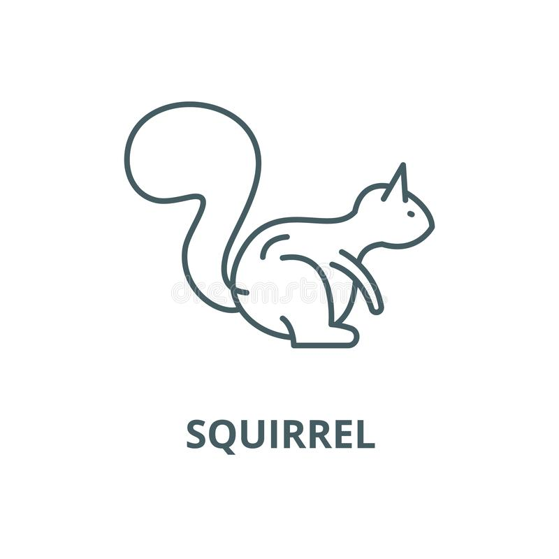 Squirrel vector line icon, linear concept, outline sign, symbol stock illustration
