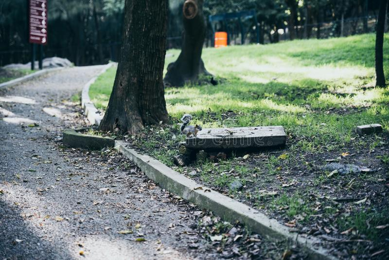Squirrel at the empty Chapultepec forest due to the earthquake, stock photography