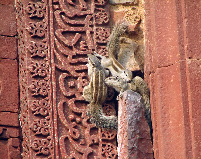 Squirrel on wall royalty free stock images