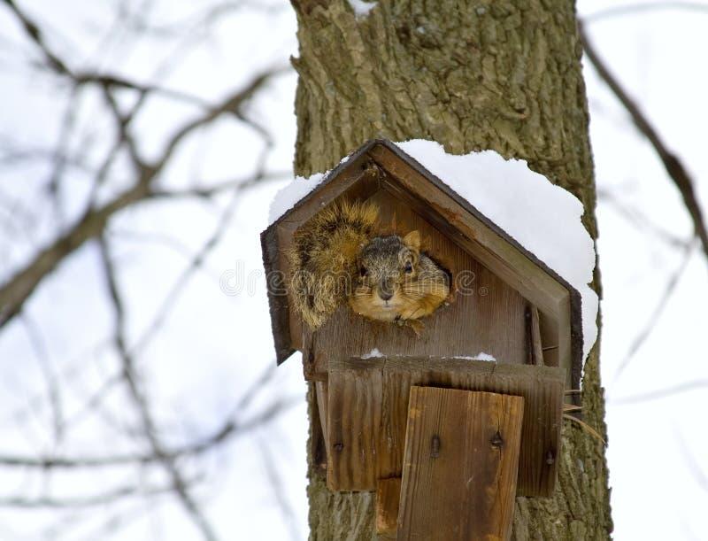 Squirrel Winter Home stock photo