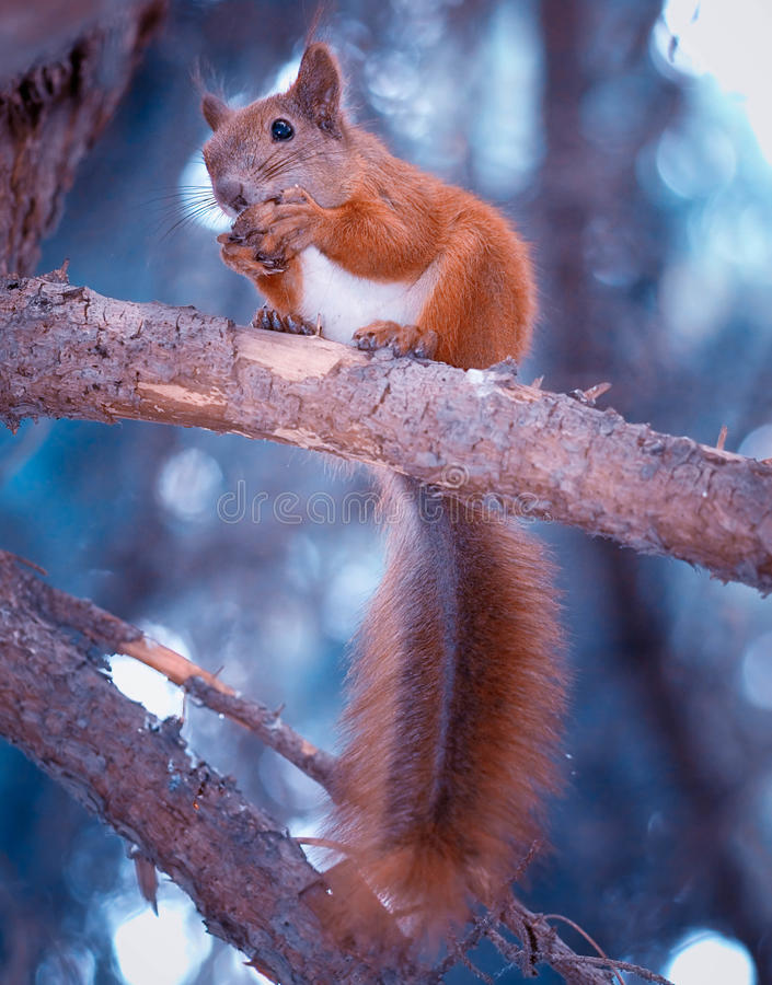 Free Squirrel With Nut Royalty Free Stock Photos - 25913788
