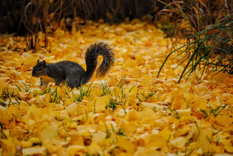 Squirrel In Yellow Grass Free Public Domain Cc0 Image
