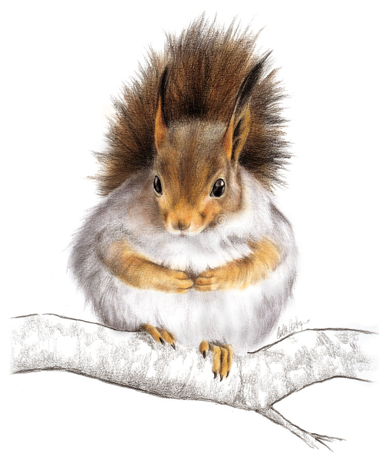 Squirrell bonito ilustração royalty free