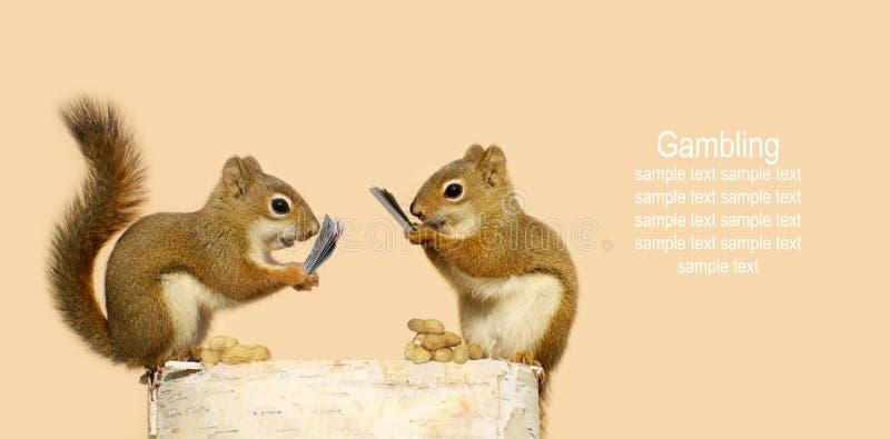 Squirrels играя карточки. стоковые изображения rf