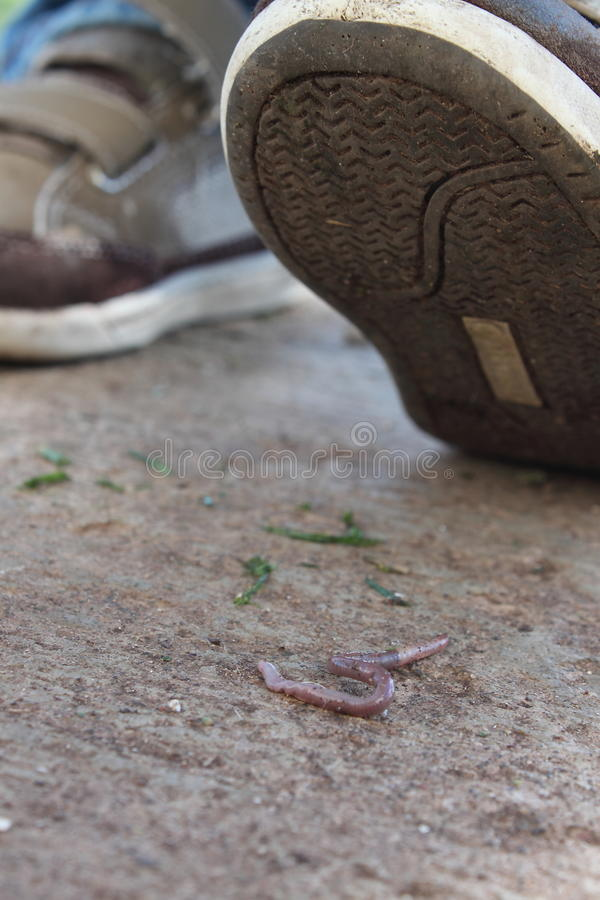 Download Squished stock photo. Image of shoe, bait, slimy, grass - 18970956