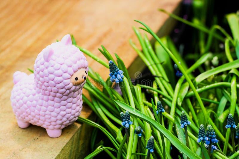 Squishy leksak för rosa liten lama på träbräde med blåa blommande blommor för hyacint för muscariarmeniacumdruva och ljust - grön royaltyfri bild