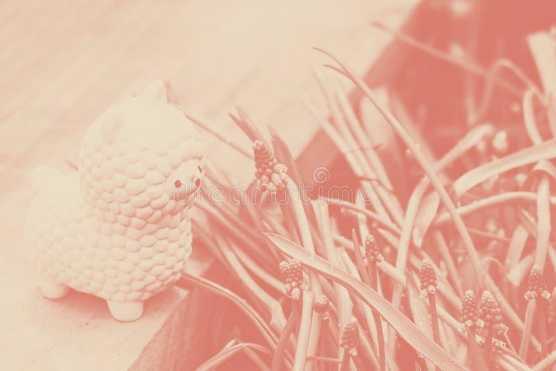 Squishy leksak f?r rosa liten lama p? tr?br?de med bl?a blommande blommor f?r hyacint f?r muscariarmeniacumdruva och ljust - gr?n royaltyfria bilder